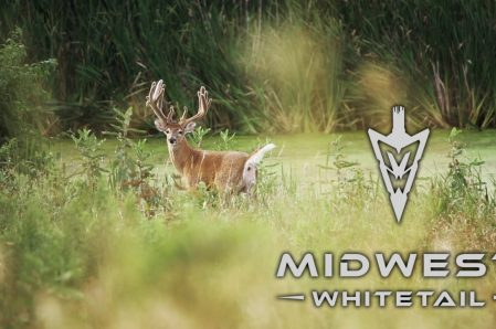 Midwest Whitetail